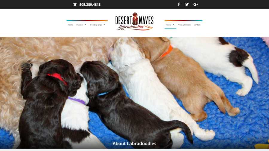 Desert Waves Labradoodles - website screenshot - about