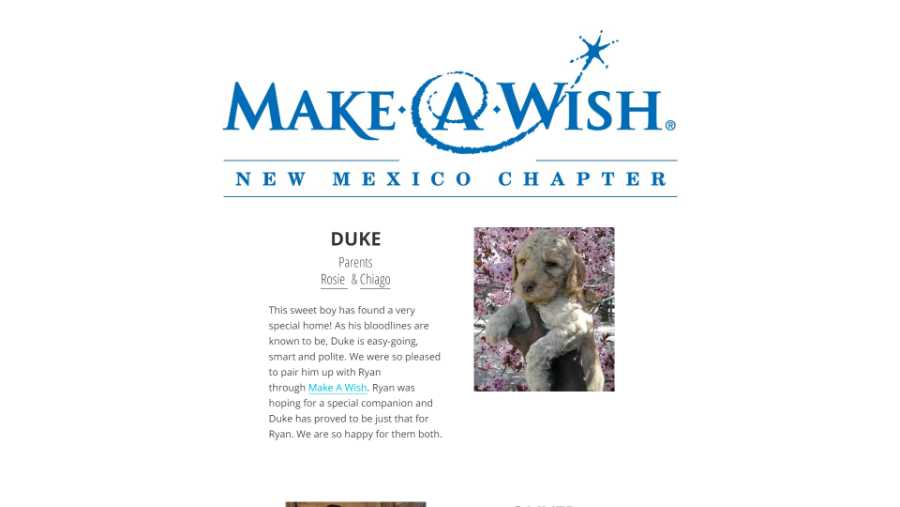 Desert Waves Labradoodles - website screenshot - Make a wish