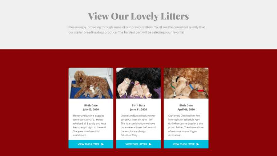 Desert Waves Labradoodles - website screenshot - Litters