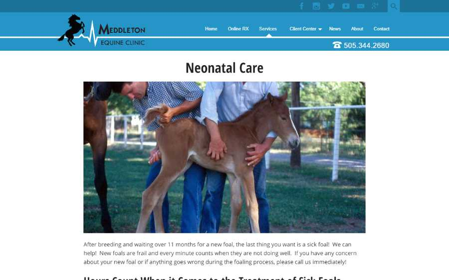 Meddleton Equine Clinic - desktop screenshot - neonatal service